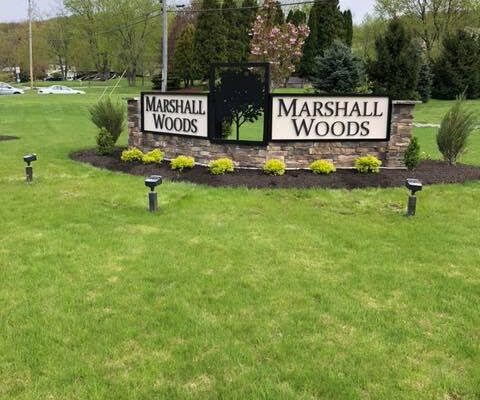 marshall woods